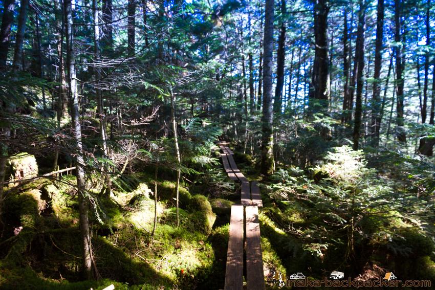 白駒池からの山道への道のり バックパッカー