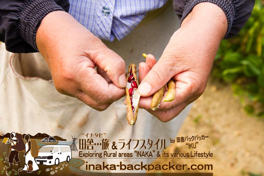 石川県 奥能登一周中 - 大豆畑で / Ishikawa Pref. on Noto Peninsula - Soybean farm.