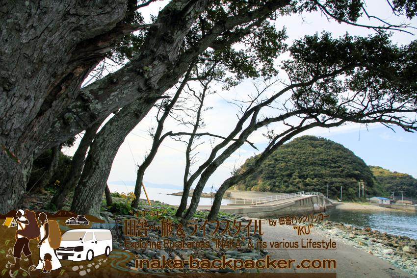 愛媛県 八幡浜大島 - 三王島からみた大島。このあたりに売店や海水浴場があったそうだ。