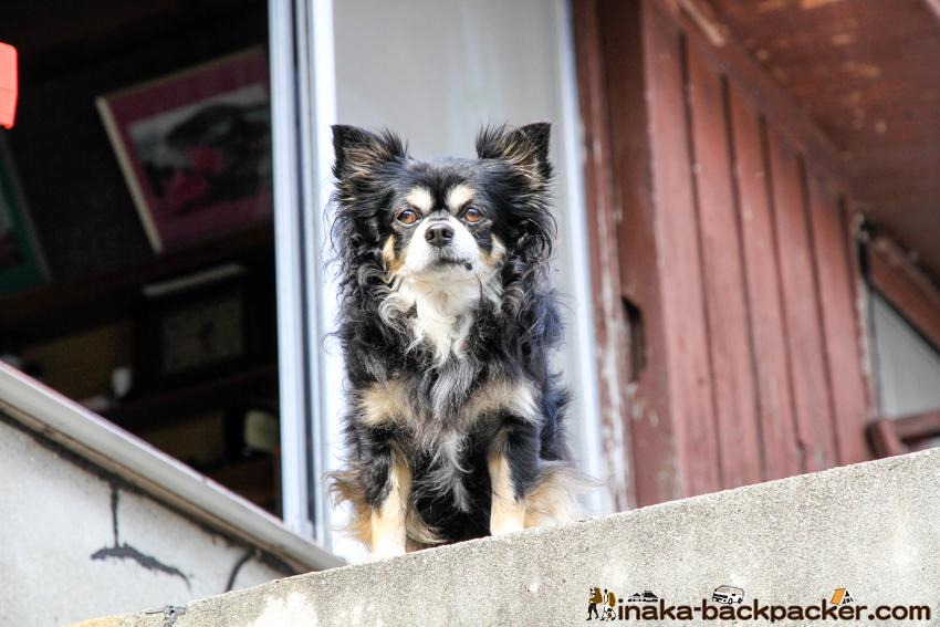 犬ににらまれる 愛媛