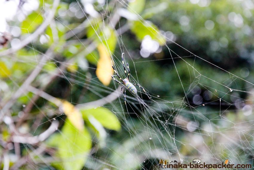 愛媛県 島 イノシシ 蜘蛛