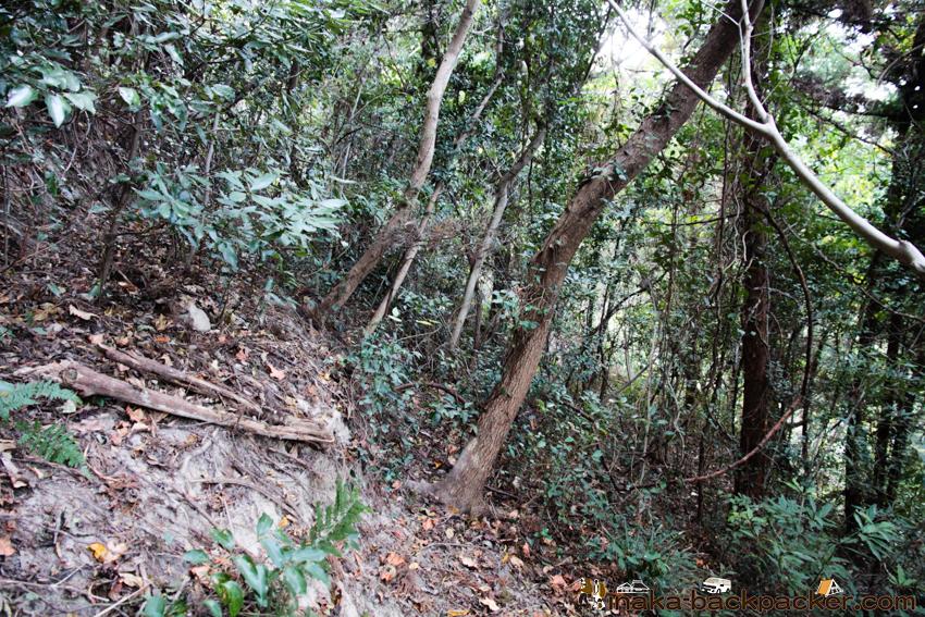 愛媛県 大島 イノシシの被害