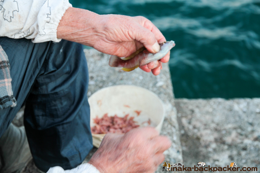 愛媛 大島 釣り 90歳でも釣り