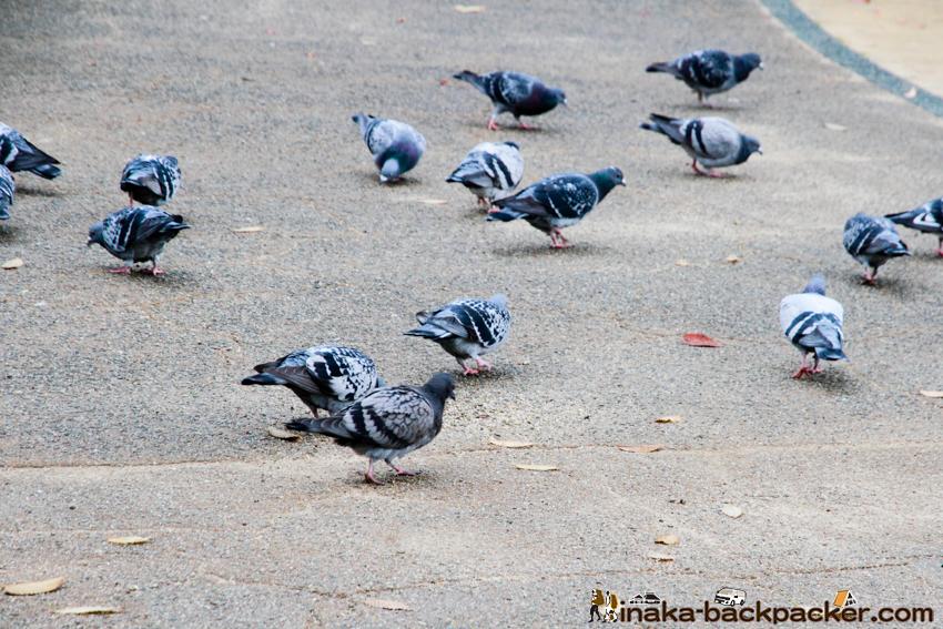 徳島  小松島ステーションパーク 鳩が多い