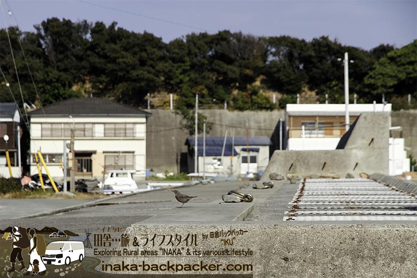 愛媛県日振島 野鳥 ehime hiburishima bird