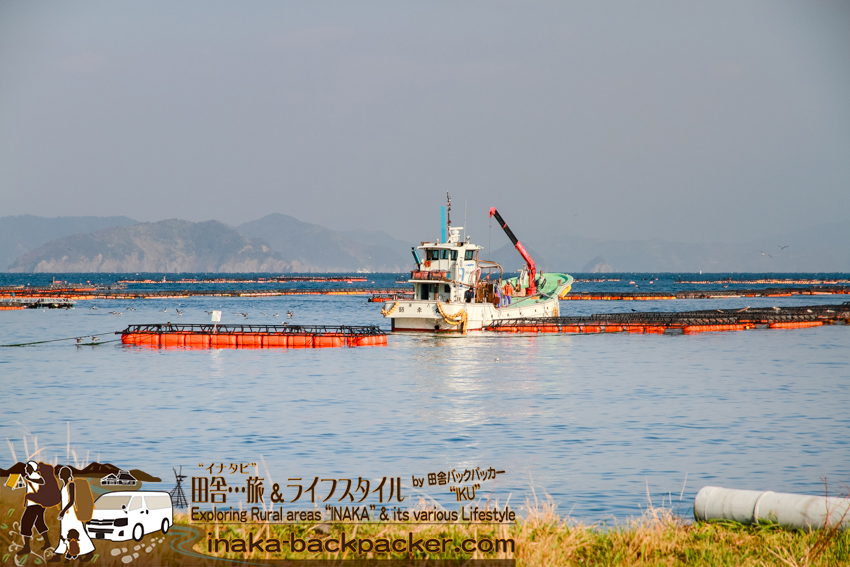 愛媛県 日振島 養殖事業 筏 Ehime Hiburishima island aquaculture japan