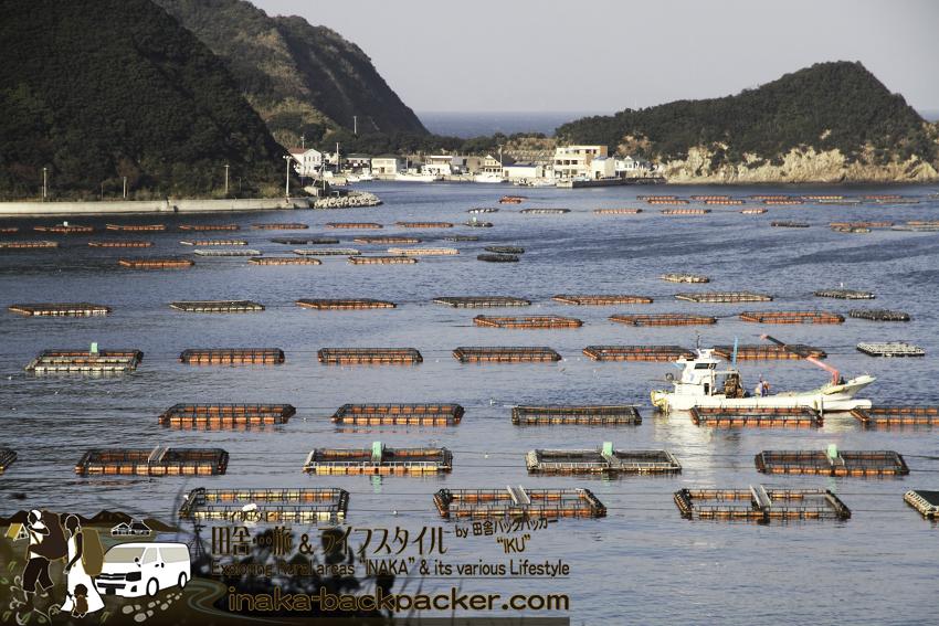 愛媛県 日振島 養殖事業 筏 大規模  Ehime Hiburishima island aquaculture japan