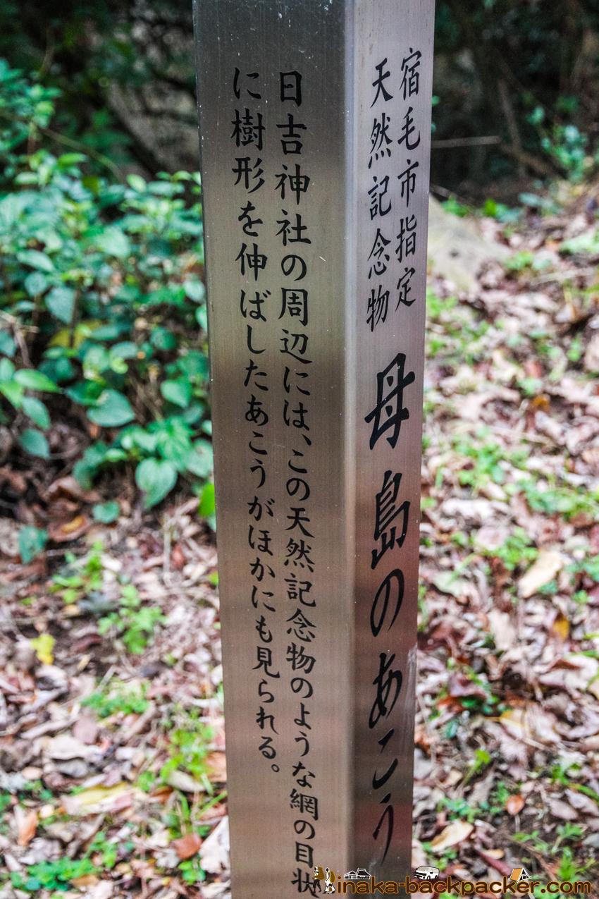 Okinoshima island in Kochi Japan 高知県 沖の島 母島 あこうの木