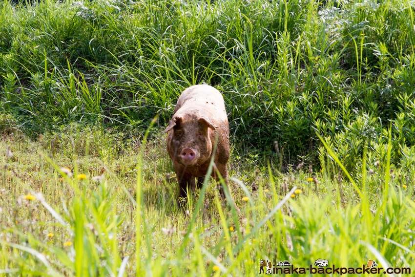 イベリコ豚 能登