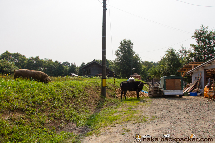 イベリコ豚 牛 酪農 能登