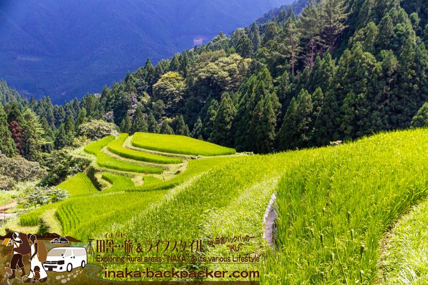 上勝町 樫原の棚田 徳島県 kamikatsu rice terrace