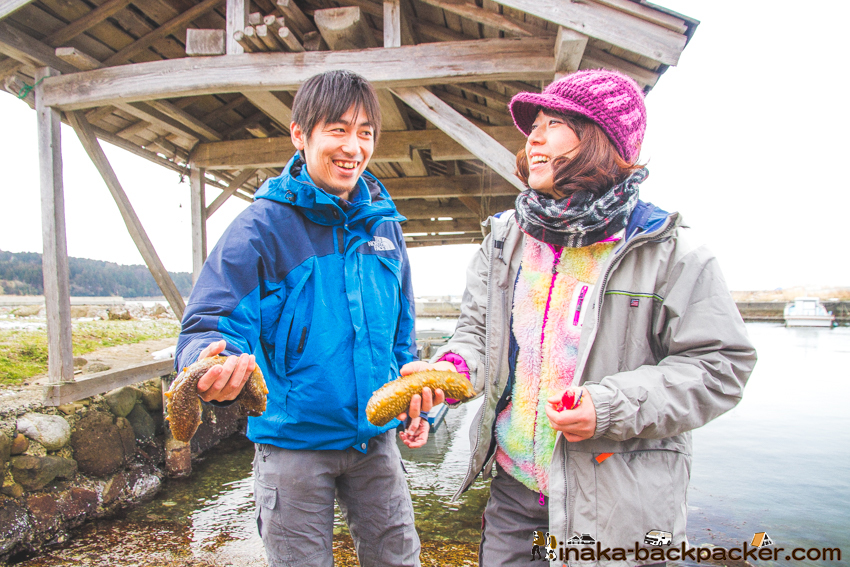 穴水町 ナマコ where to catch sea cucumber in Japan