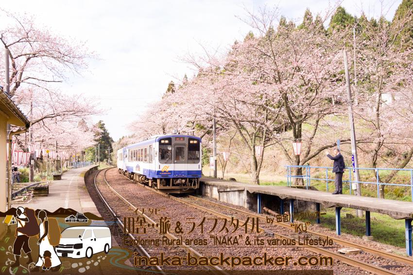 桜のトンネルの中をのと鉄道の列車が通り過ぎていく