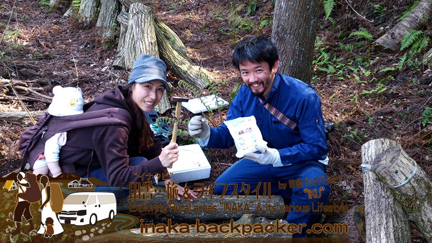 能登・穴水町岩車 - キノコの菌をどんぐりの木に打ち込む。