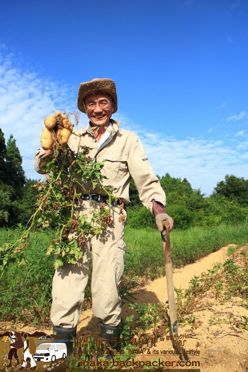 ジャガイモは大成功。美味しいジャガイモが沢山できた。雑草刈り、土おこし、苗植え...などけっこう大変な作業。