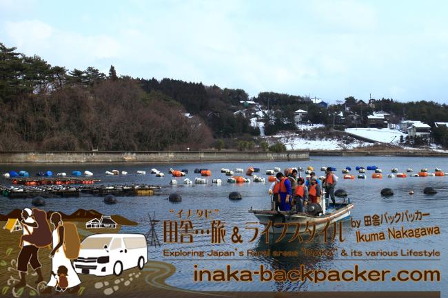 能登・穴水町椿崎(あなみずまち つばきざき)のマリーナ – 牡蠣の水揚げ作業体験をした後は…