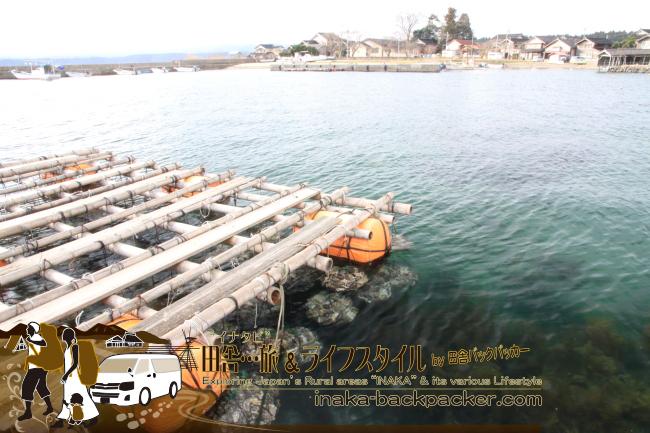 能登・穴水町岩車(石川県) - 岩車で、雪中ジャンボかきまつりのために出荷準備中の何万個もの牡蠣。穏やかな内海で育てられた。