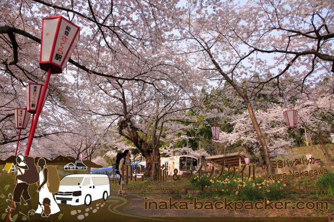 """日本を代表する""""サクラ""""駅がここ能登(石川県)に!「能登さくら駅」 。駅降りて、ここでランチ/昼食でもどうだろうか。満開時、テント下で軽食を購入することができる。地酒やクラフトビールも...飲みたいところ。"""