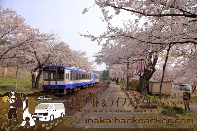 """ぼくらバックパッカーファミリーが移住したここの能登の田舎に日本の""""桜""""駅を代表する駅がある。能登・穴水町""""能登さくら駅""""(能登鹿島駅) - 駅全体に広がる80~90本の桜"""