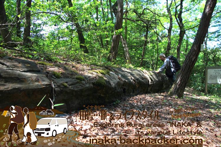 能登町の『ヒデッ坂』または珪化木公園にある珪化木(けいかぼく)