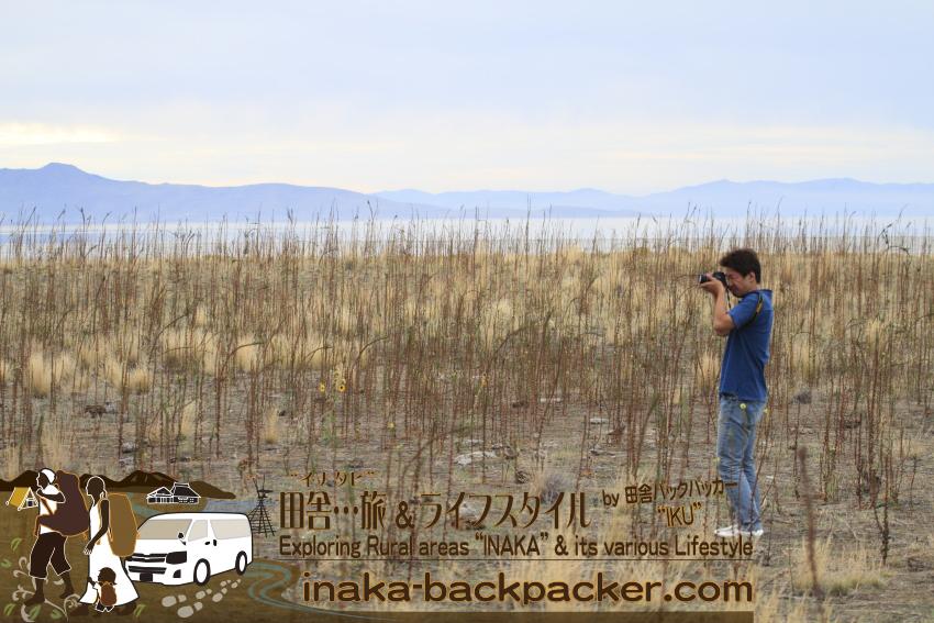 ユタ州グレートソルトレイク・アンテロープアイランド(島) - 野生のバイソンに近づき撮影中のおとなぎさん。