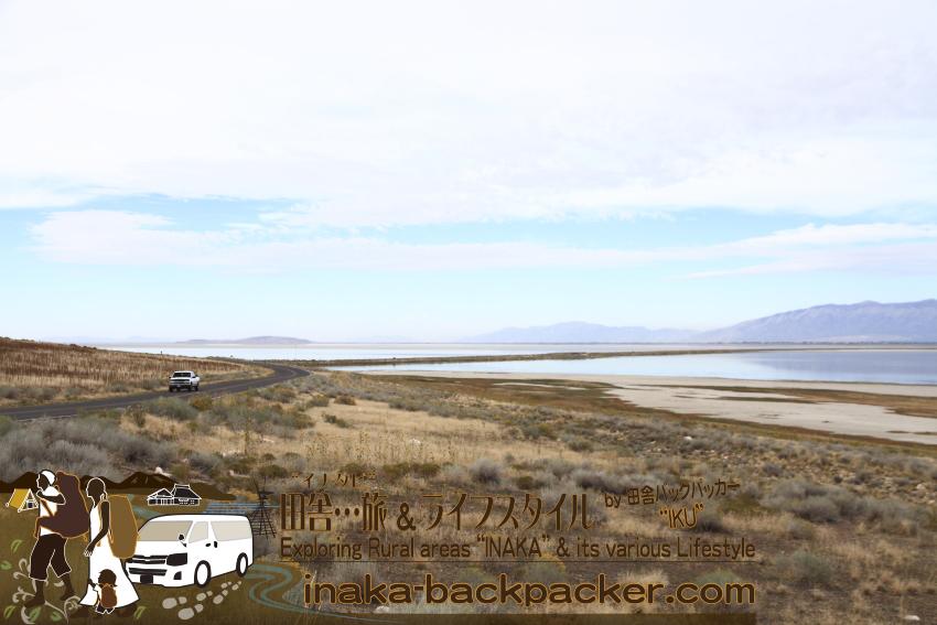 ユタ州グレートソルトレイク・アンテロープアイランド(島) - 島を走る一大のピックアップトラック。