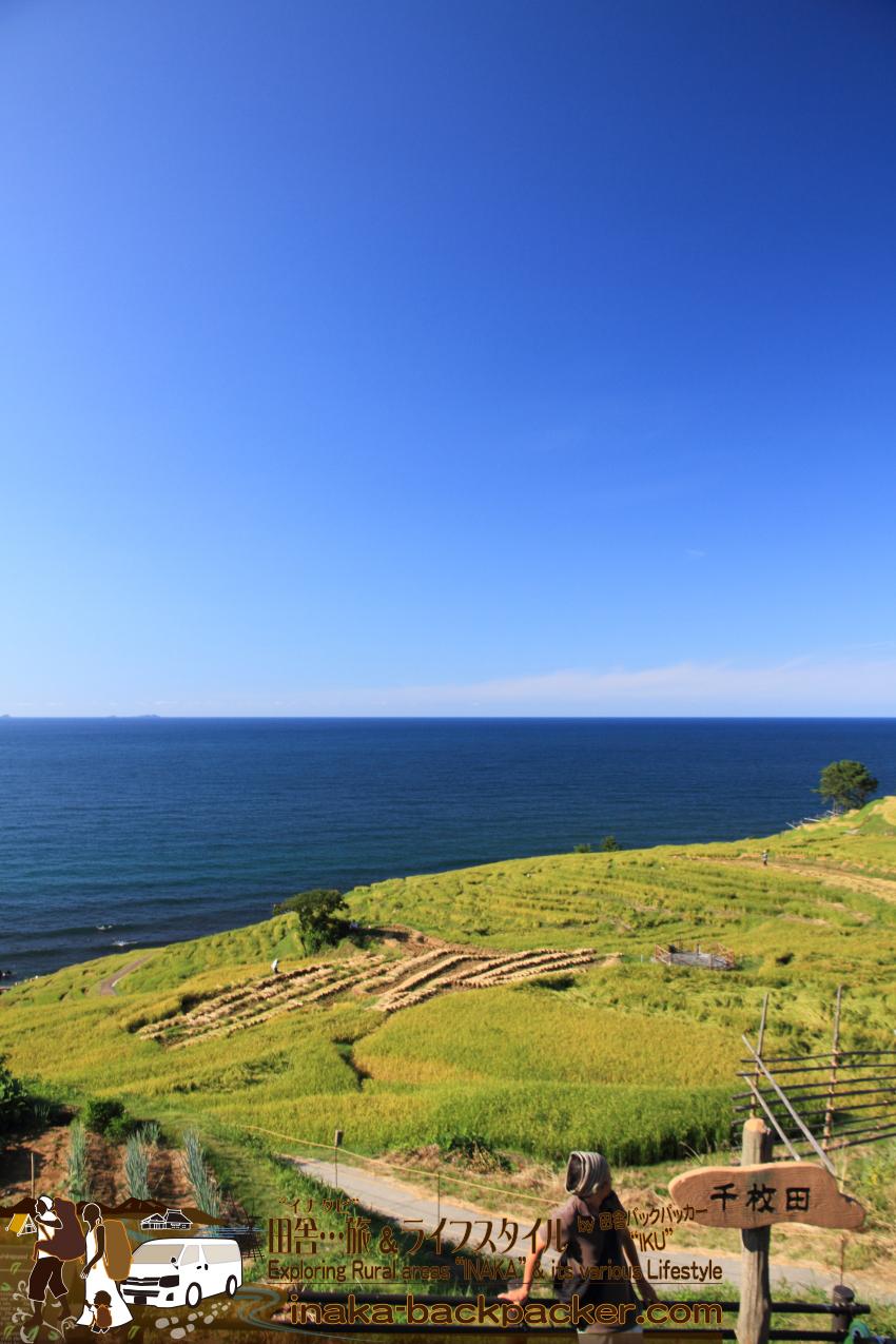 夏の千枚田 日本を代表する棚田 棚田百選の白米千枚田 rice terrace in Japan