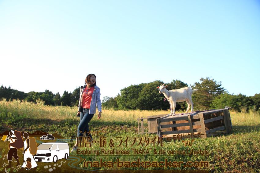 能登・穴水町鹿波 - 道坂一美さんの「タンポポファームにて。常に道坂さんと仲良くコミュニケーションしているので、ヤギは人懐っこい。