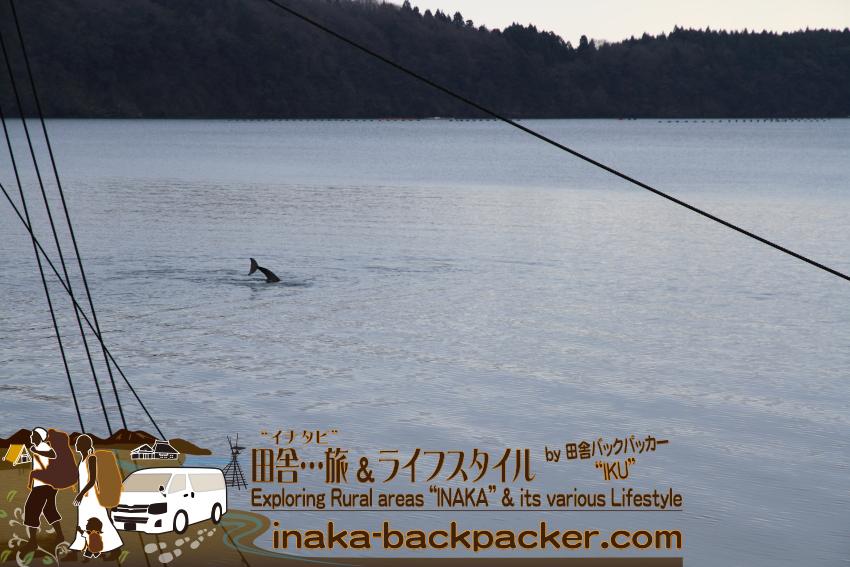 能登・穴水町中居(石川県) -  「野生のイルカ出てこないかな~...」と思いながらクルマを走らせていたら、イルカの背びれを発見。中居湾ポケットパークにクルマを停めて、撮影タイム。