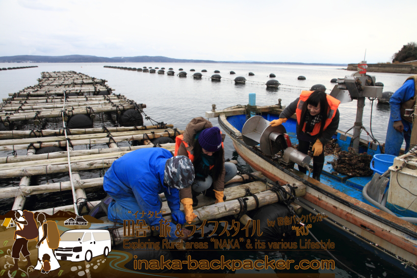 そして第二班。結花さんとゆうこちゃん。牡蠣がついているロープを船へと持っていく。これが重い!「なんか暑くなってきた~」とゆうこちゃん。