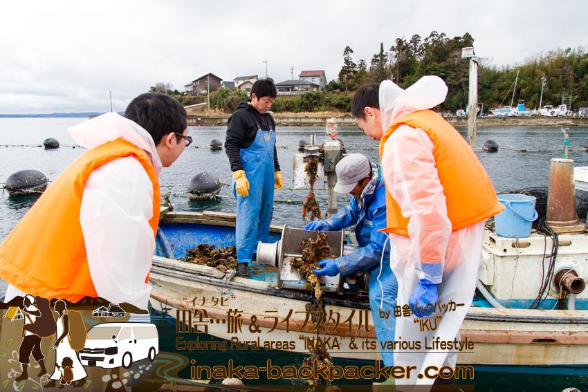 能登 牡蠣の水揚げ体験