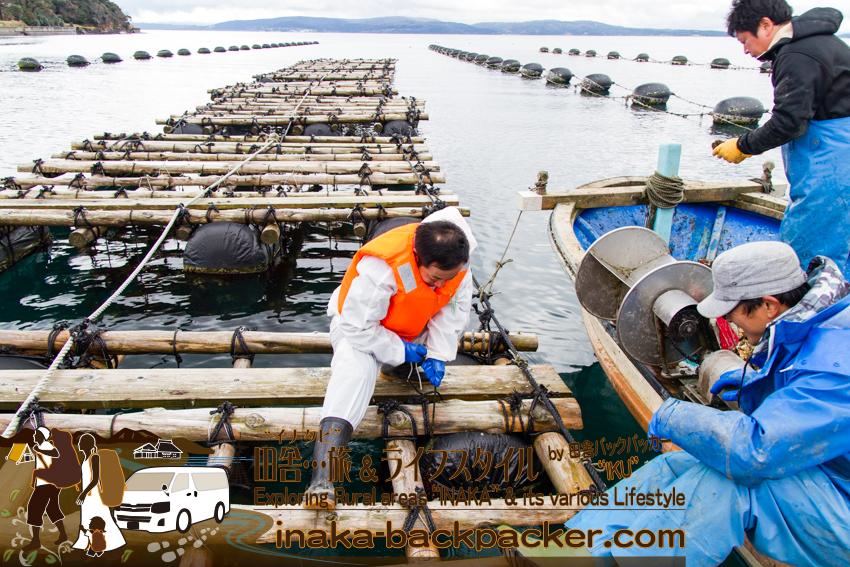 牡蠣の水揚げ体験