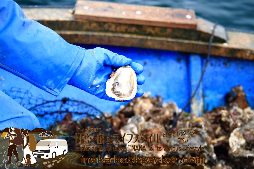 能登の生牡蠣食べられるスポット