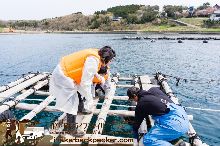 牡蠣の養殖体験 水揚げ体験 穴水町