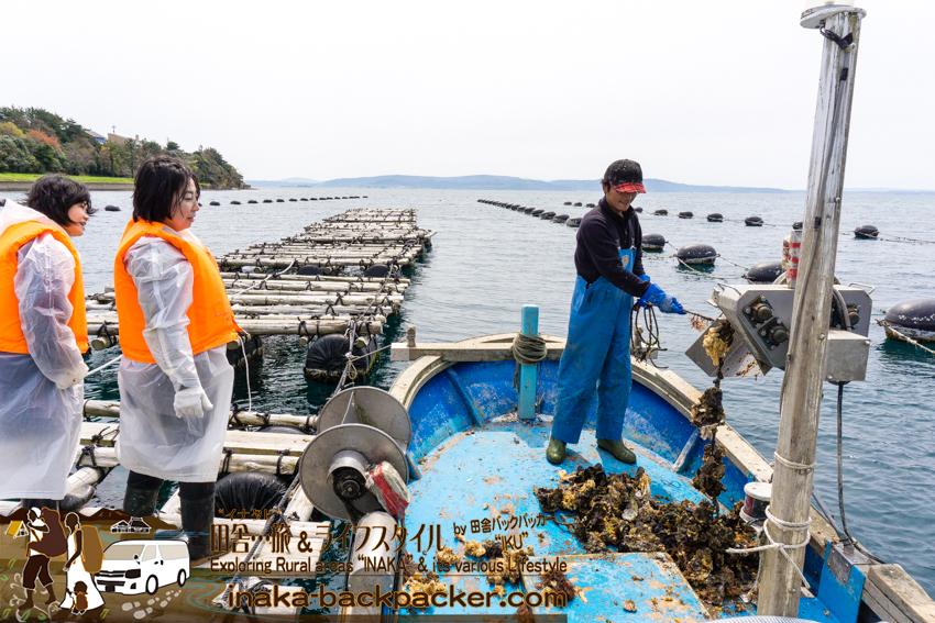 牡蠣を海から揚げる作業