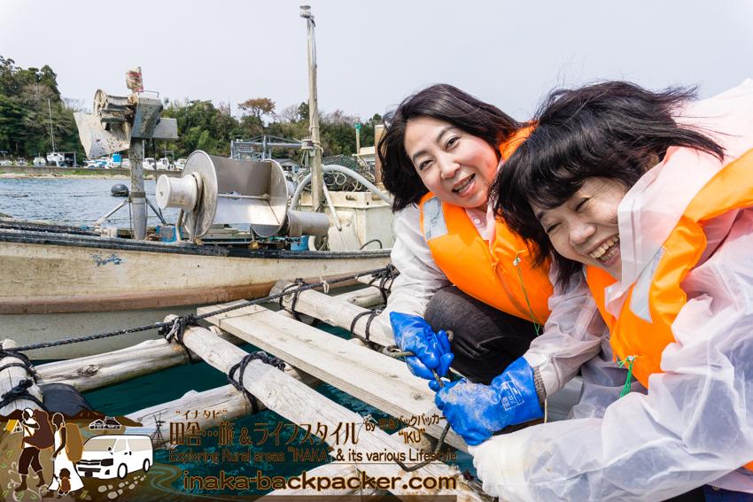 牡蠣の水揚げ 体験
