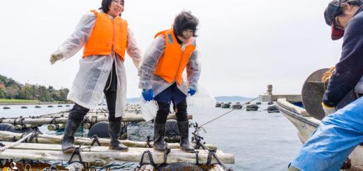 水揚げ体験 牡蠣漁の体験