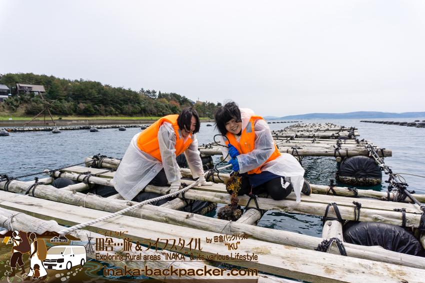 穴水町 能登牡蠣養殖 田舎体験