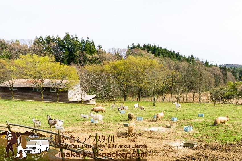 酪農家 道坂一美さん宅の農場 ストレスなく育っている動物たち