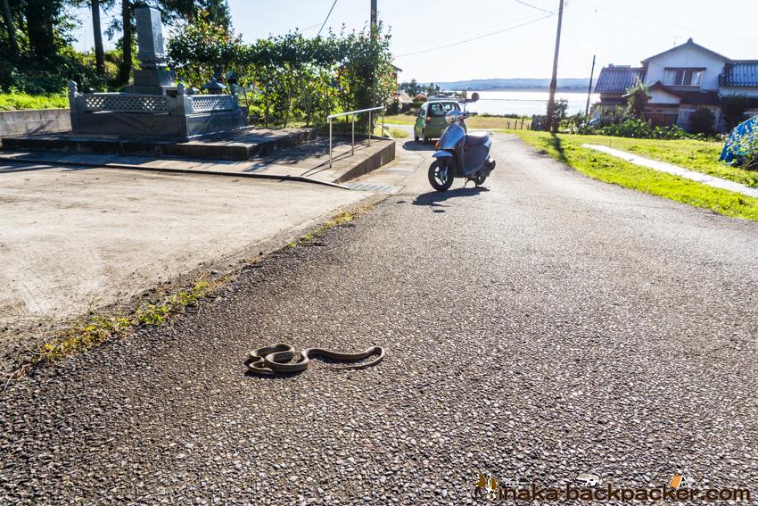 田舎 蛇 虫 暮らし
