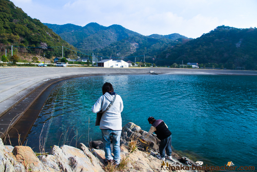 熊本県 天草 海 透明度 網