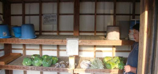 熊本県 天草 100円野菜 無人販売所