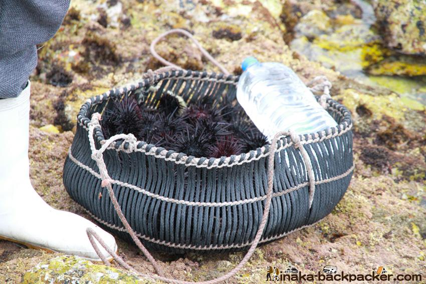 熊本 天草 ウニ採り kumamoto amakusa sea urchin