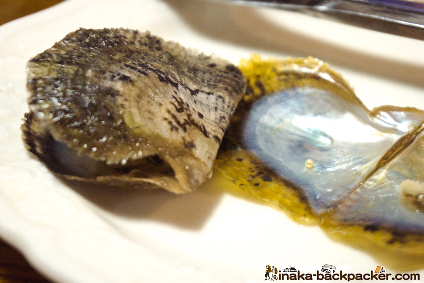 天然 真珠 石川県 日本海 阿古屋貝 真珠貝