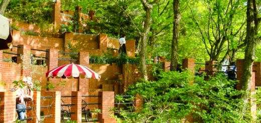 鎌倉 樹ガーデン 穴場 カフェ