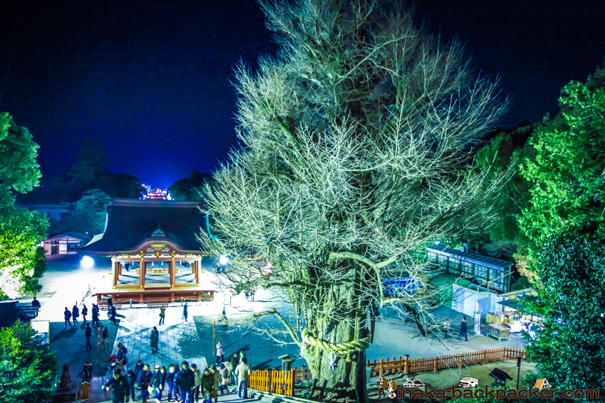 鎌倉 鶴岡八幡宮 銀杏の木 今はなき