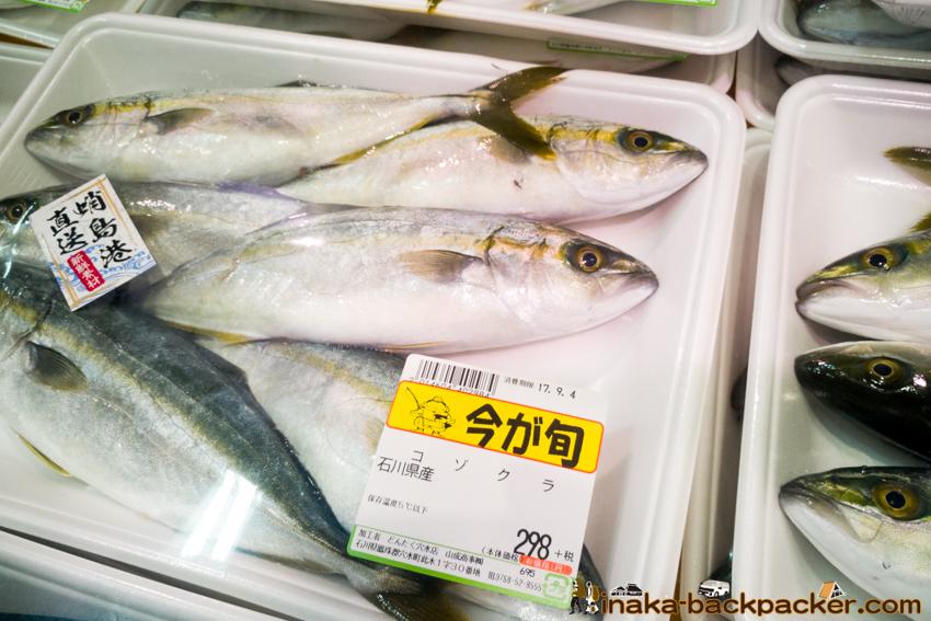 フクラギ  ブリ 出世魚