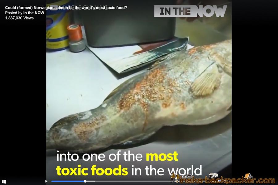 ノルウェー 養殖 サーモン 鮭 事情 famed salmon