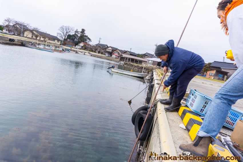 Sea Cucumber in Anamizu ナマコ 穴水町 石川県 能登