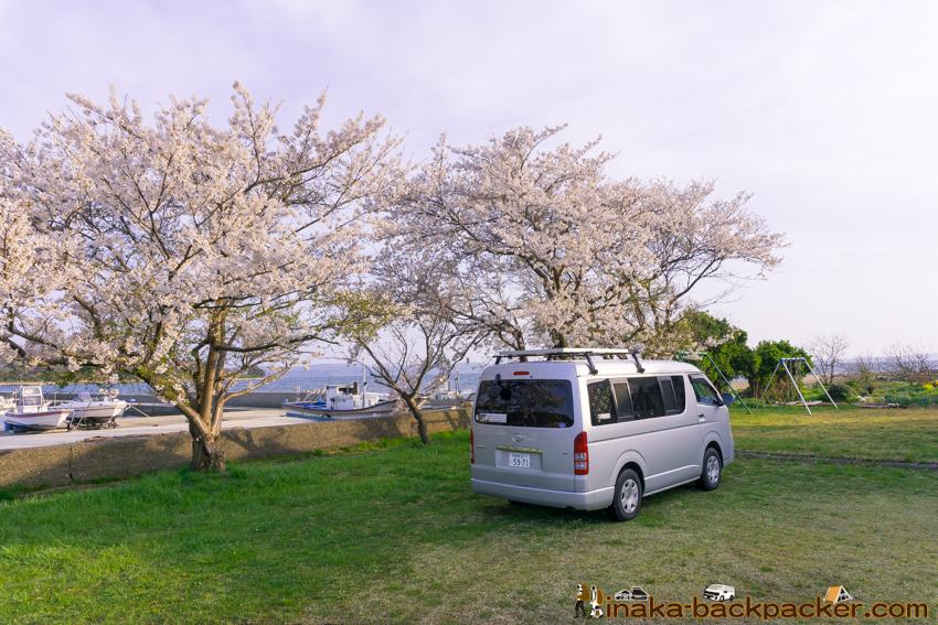 Sakura in Iwaguruma Anamizu 桜 花見スポット 穴水町 岩車